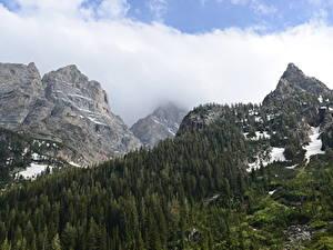 Bilder Gebirge Wälder Herbst Landschaftsfotografie Park Felsen Schnee Grand Teton National Park, Wyoming