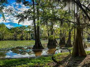Fotos USA See Wälder Texas Bäume Caddo Lake Natur