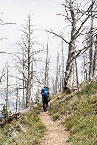 Bilder Park Vereinigte Staaten Yellowstone Weg Bäume Wanderung Yellowstone national park Natur