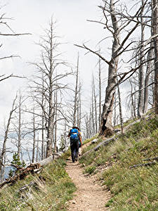 Pictures Parks USA Yellowstone Path Trees Walking Yellowstone national park
