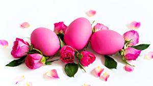 Photo Easter Roses White background Pink color Egg Flowers