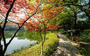 Sfondi desktop Cina Kyoto Parco Lago Alberi Natura