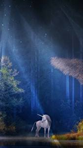Images Forests Unicorns Rays of light Trees Night time Fantasy