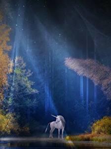Bilder Wälder Einhorn Lichtstrahl Bäume Nacht Fantasy