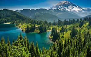 Hintergrundbilder USA Park See Gebirge Wälder Landschaftsfotografie Mount-Rainier Park Fichten Lake Eunice Natur