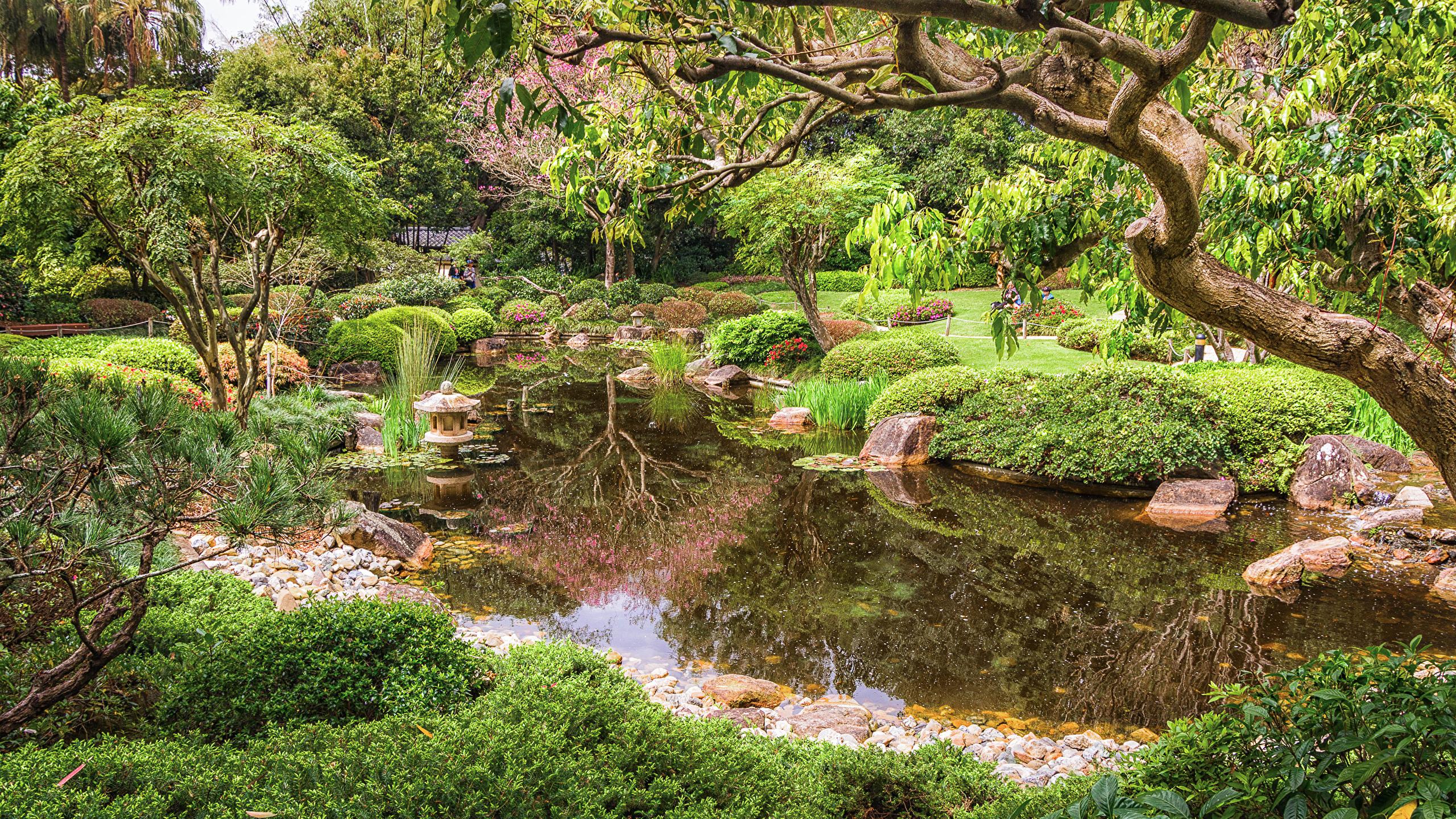 Wallpaper Brisbane Australia Nature Pond Parks Branches