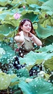 Fotos Asiaten Lotus Braunhaarige Blattwerk