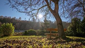 Fotos Herbst Bäume Bank (Möbel) Gras Blattwerk Sonne Ast