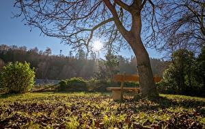 Pictures Autumn Trees Bench Grass Foliage Sun Branches