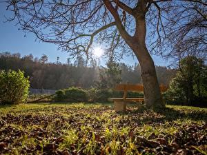 Fotos Herbst Bäume Bank (Möbel) Gras Blattwerk Sonne Ast Natur