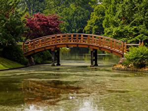 Fotos Vereinigte Staaten Park Teich Brücken Missouri Botanical Garden Natur