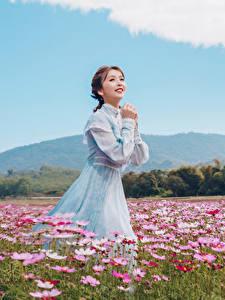 Desktop hintergrundbilder Grünland Asiaten Schmuckkörbchen Kleid Braune Haare Niedlich junge frau Blumen