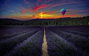 Fotos Lavendel Acker Sonnenaufgänge und Sonnenuntergänge Landschaftsfotografie Fesselballon