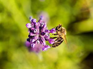 Bilder Hautnah Bienen Insekten Unscharfer Hintergrund junge frau