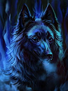 Hintergrundbilder Hunde Gezeichnet Nacht Kopf Starren Shepherd Groenendael