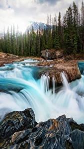 Bilder Wasserfall Flusse Landschaftsfotografie Kanada Steine Wälder Natur