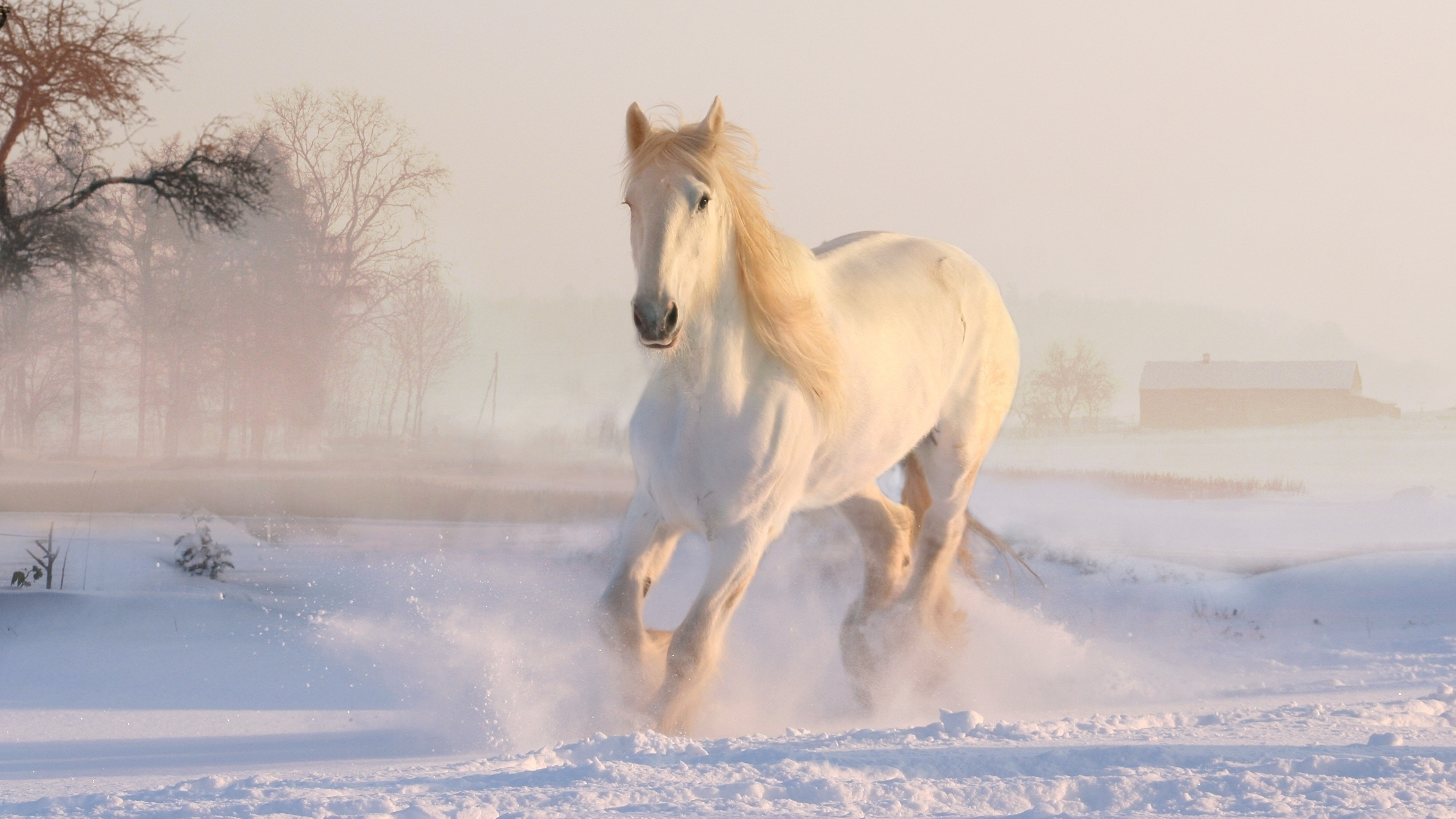 Image Horse White Winter Snow Animal 3840x2160
