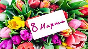 Bilder 8 März Tulpen Russische Blumen