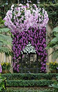 Hintergrundbilder USA Garten Orchideen Tür Longwood Gardens Natur