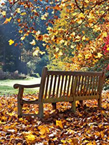 Fotos Herbst Park Bank (Möbel) Blattwerk