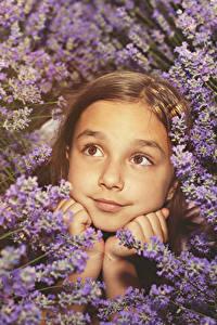Bilder Lavendel Kleine Mädchen Gesicht Blick kind