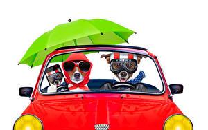Bilder Hunde Weißer hintergrund Zwei Jack Russell Terrier Brille Regenschirm Smartphones Komische Tiere