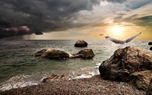 Hintergrundbilder Küste Stein Himmel Vögel Möwen Wolke Blitze Natur