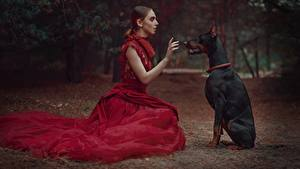 Fonds d'écran Chien S'asseyant Dobermann Les robes Anastasia Dobrovolskaya Filles Animaux