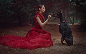 Photo Dogs Sit Doberman Pinscher Frock Anastasia Dobrovolskaya Animals