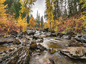 Image Stones Autumn Forests USA Moss Brook Flathead National Forest, Montana state Nature