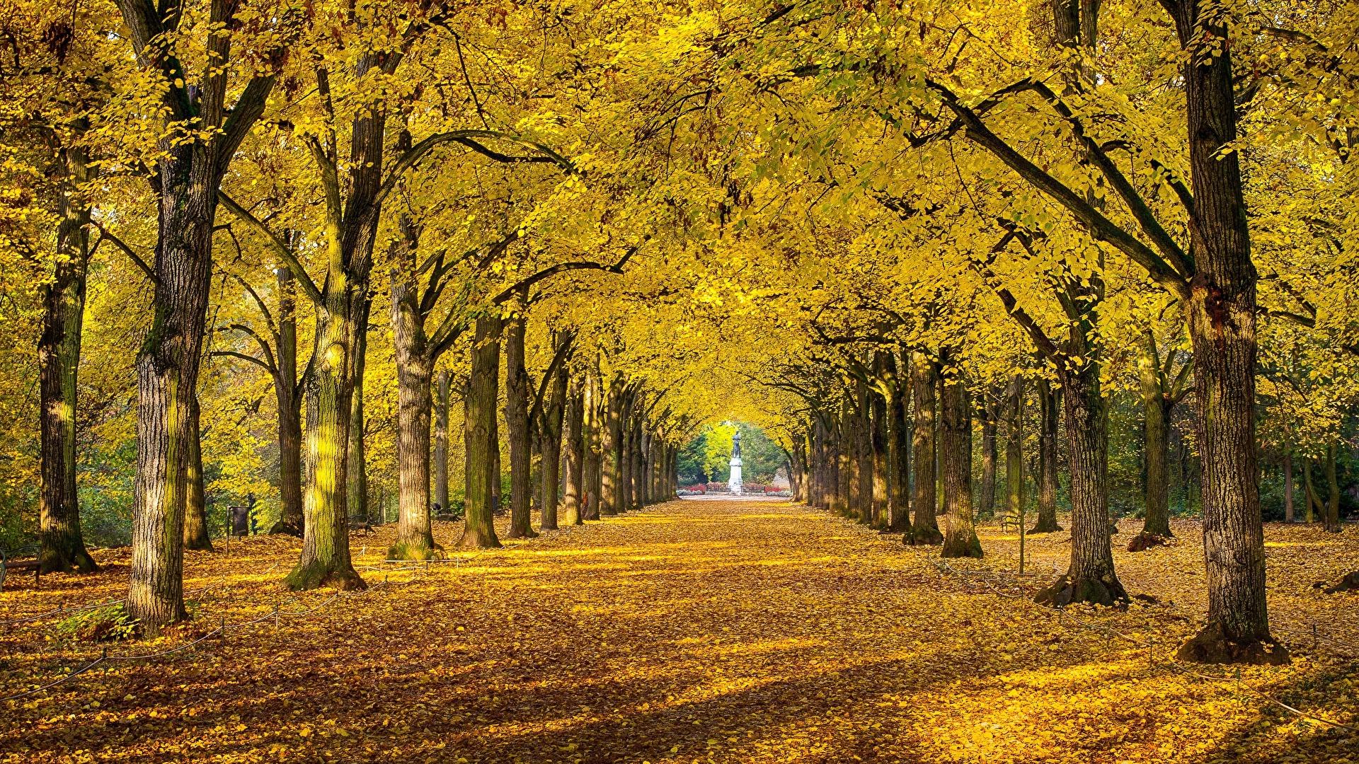壁紙 19x1080 秋 公園 木 木の葉 小路 自然 ダウンロード 写真