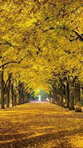 Wallpapers Autumn Parks Trees Leaf Allee Nature