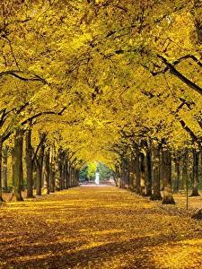 Fotos Herbst Park Bäume Blatt Allee