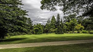 Fotos Vereinigtes Königreich Park Rasen Bäume Ast Garden Harlow Carr Natur