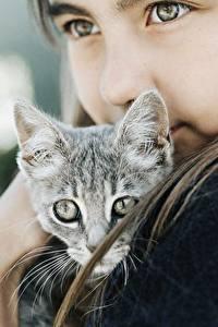 Bilder Hauskatze Niedlich Starren Kleine Mädchen Kätzchen Tiere