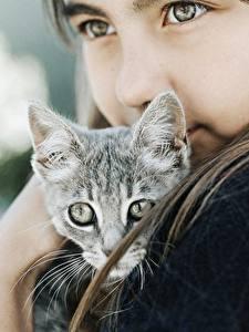 Bilder Hauskatze Niedlich Starren Kleine Mädchen Kätzchen Kinder