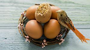 Bilder Feiertage Ostern Vogel Bretter Ei Nest