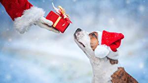 Hintergrundbilder Neujahr Hunde Mütze Geschenke Hand Tiere