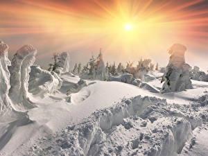 Bilder Jahreszeiten Winter Schnee Sonne Fichten