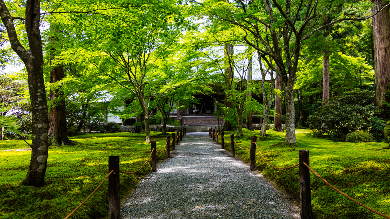 Wallpaper Kyoto Japan Ohara Nature Park Trees 1366x768