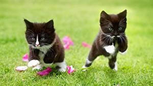 Image Cats Jump Grass Kitty cat 2 Black animal