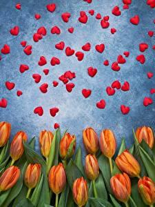 Papel de Parede Desktop Dia dos Namorados Tulipa Coração flor