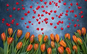 Picture Valentine's Day Tulips Heart Flowers
