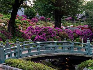 Bilder Japan Kyōto Park Brücken Strauch
