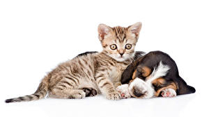 Image Dogs Cats White background 2 Kitty cat Basset Hound Puppy Sleep Animals