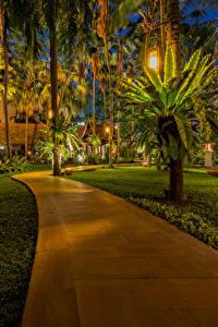 Hintergrundbilder Thailand Parks Tropen Palmengewächse Straßenlaterne Rasen Gehweg Pattaya