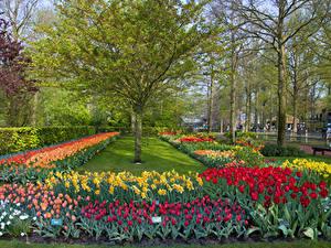 Hintergrundbilder Niederlande Park Tulpen Narzissen Bäume Design Keukenhof Lisse Natur