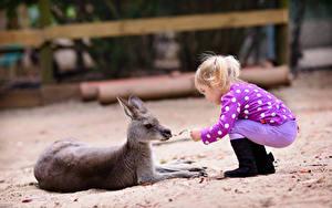 Fotos Kängurus Jungtiere Kleine Mädchen Kinder