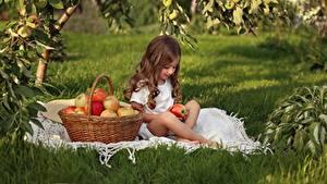 Hintergrundbilder Äpfel Weidenkorb Sitzt Kleine Mädchen Braune Haare Gras Kinder
