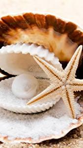 Fotos Hautnah Perlen Seesterne Muscheln Sand Salz Natur